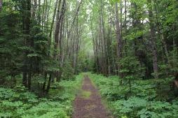 Sentier les Anses dans une magnifique forêt de feuillus.