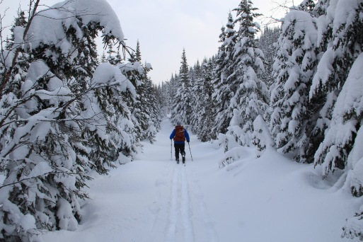 De la neige amenez-en ! Crédit photo: Alain Côté